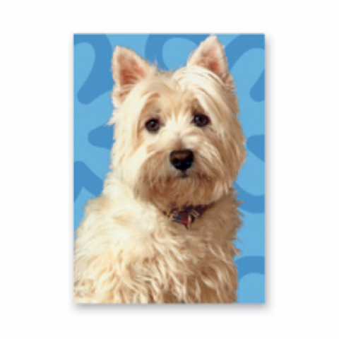 West Highland Terrier card with blue background